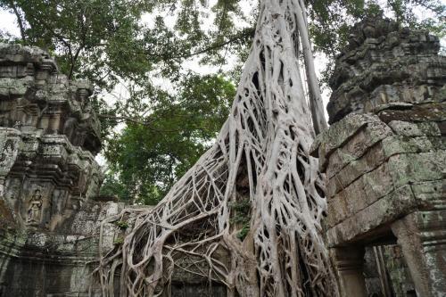 Cambodja 15-01-2017  (063)